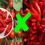 Goji Berry x Pimenta Malagueta – É igual ou diferente?