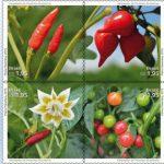Pimentas brasileiras inspiram série de selos dos Correios