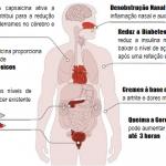 Os Benefícios da Pimenta para Saúde
